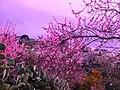 Panorama San Nicola da Crissa.jpg