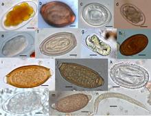 Les règles de la préparation du poisson les parasites