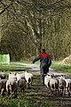 Park Cronesteyn Lente in Cronesteyn (16825638950).jpg
