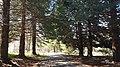 Parku i Malit të Dajtit.jpg