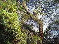 Parque Botánico - panoramio (9).jpg