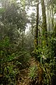 Parque Nacional da Tijuca by Diego Baravelli 04.jpg