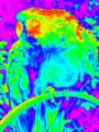 Parrot false color palette.png