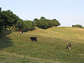 Pasture Field - geograph.org.uk - 219457.jpg