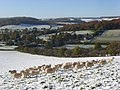 Pastures in snow, Fingest - geograph.org.uk - 1034010.jpg