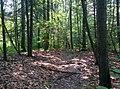 Path in the woods - panoramio.jpg
