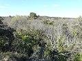 Paysage au sud du zoo de Lunaret (2363301049).jpg