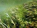 """Paysage subaquatique Subaquatic landscape rivière """"Les Baillons"""" à Enquin-sur-Baillons F Lamiot 19.jpg"""