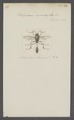 Pelopoeus - Print - Iconographia Zoologica - Special Collections University of Amsterdam - UBAINV0274 043 07 0011.tif
