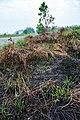Pengalat-Besar Sabah Pengalat-Siding-04c.jpg