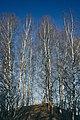 PermaLiv Majer ved Kloppvegen 19-02-22.jpg