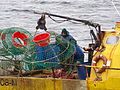 Pesca de centolla en la Bahía Ushuaia 06.JPG