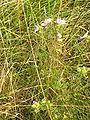 Pflanze 0022b.jpg