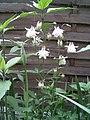 PflanzenMai06-013.JPG