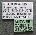 Pheidole bilimeki casent0173658 label 1.jpg