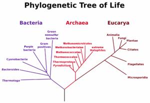 Carl Woese - Image: Phylogenetic Tree, Woese 1990