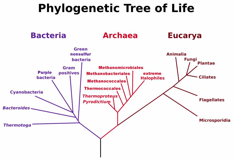 PhylogeneticTree, Woese 1990