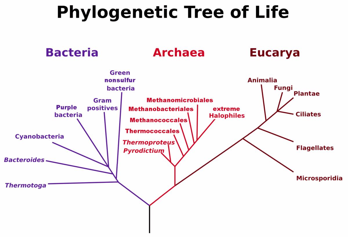 diferencia entre dominio bacteria y archaea