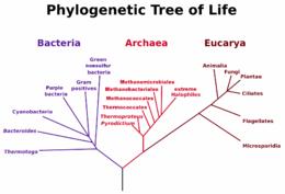 Organism Simple English Wikipedia The Free Encyclopedia