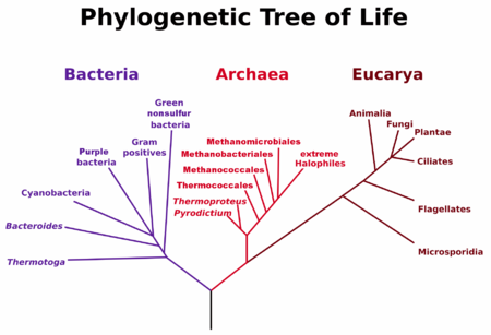 I Have a QU about the 6 Kingdoms in Biology?