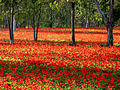 PikiWiki Israel 10702 Plants of Israel.jpg