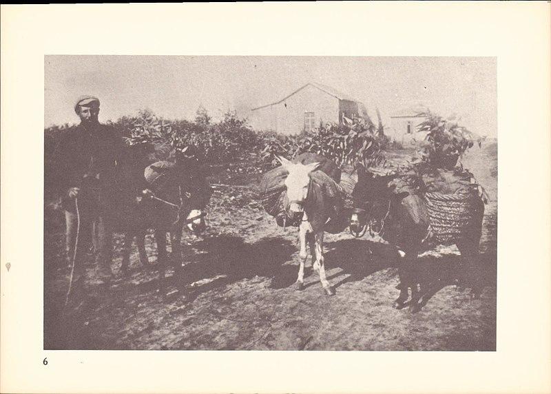 מחמר, סחורה על גבי גמלים