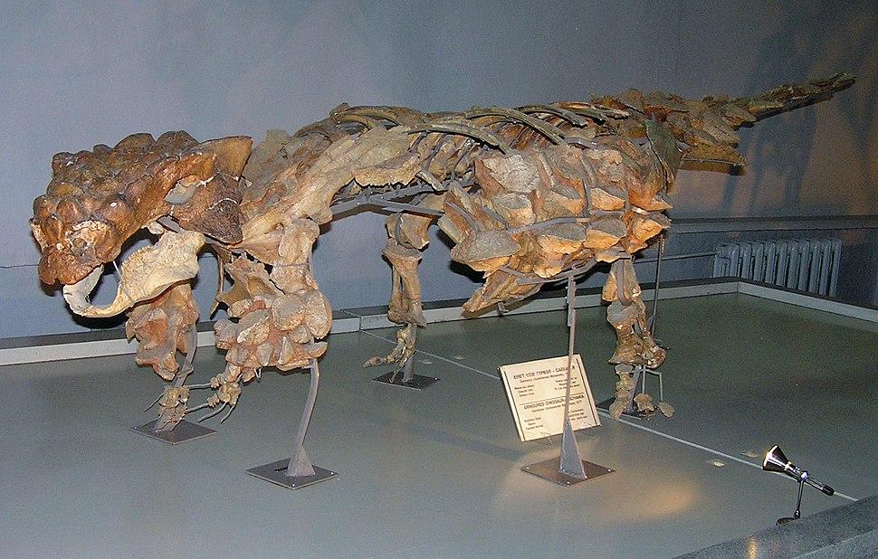Pinacosaurus skeleton