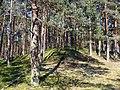 Pine forest 001.jpg