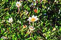 Plants from Sassolongo 11.jpg