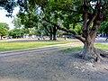 Plaza Manuel Belgrano Gobernador A Costa corregida 04.jpg