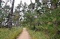 Point Lobos State Reserve California 2019 1.jpg