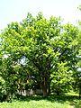 Poltava Botanical garden (143).jpg