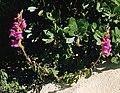 Portugal, vegetación 1980 06.jpg