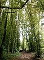 Pound Wood - Bridleway - geograph.org.uk - 582618.jpg