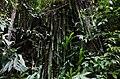Prales v okolí Machu Picchu - panoramio.jpg