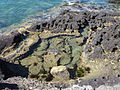 Puerto Pirámides.JPG