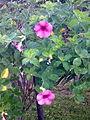 Purple flower4498.jpg