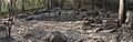 Puyango fossil tree.jpg