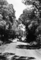 Queensland State Archives 2155 Back road Memerambi Kingaroy district 1945.png