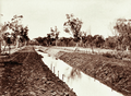 Queensland State Archives 2183 Embankment on drain carrying water from No 1 Bore at Woolerina Station 1897.png
