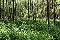 Réserve naturelle régionale des étangs de Bonnelles le 26 mai 2017 - 38.jpg