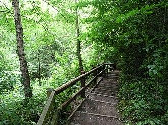 Radyr - Radyr Woods boardwalk