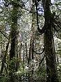 Rain Forest Walk - Pacific Rim National Park - Vancouver Island BC - Canada Crop- 01.jpg
