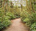 Rain forest1 BZ ies.jpg