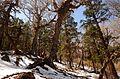 Rara national park 474747.jpg