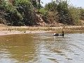 Rechtes Ufer Tsiribihina 2019-10-04 7.jpg