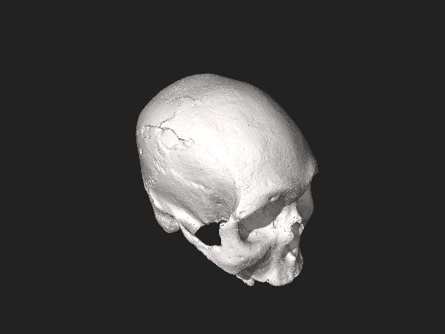 File:Reconstrução facial - crânio - Cáceres-MT.stl