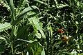 Red Berries (167828897).jpeg