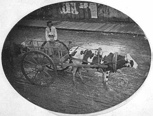 Red River Trails - An ox cart seen at the end of the trail in Saint Paul
