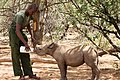 Reteti Elephant sanctuary caregiver feed a baby rhino.jpg